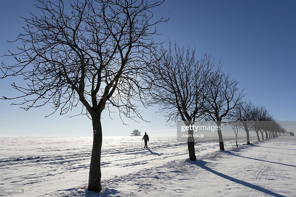 A man walks on a snow-covered field in front of the Babisnauer poplar (background), a tree that has been declared a 'natural monument' and is over 200 years old, near Dresden on December 7, 2012 in Babisnau, Germany. A low pressure system dumped snow on the south and east of the country before heading west.