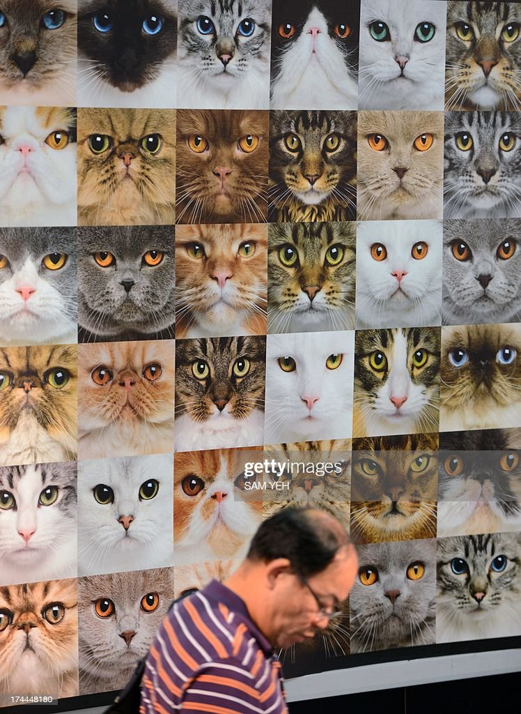 A man walks past a cat poster during the annual pet show at the World Trade Center in Nankang district, Taipei on July 26, 2013. More than 150 booths for dogs and cats have been set up for the exhibition which takes place from July 26-29. AFP PHOTO / Sam Yeh