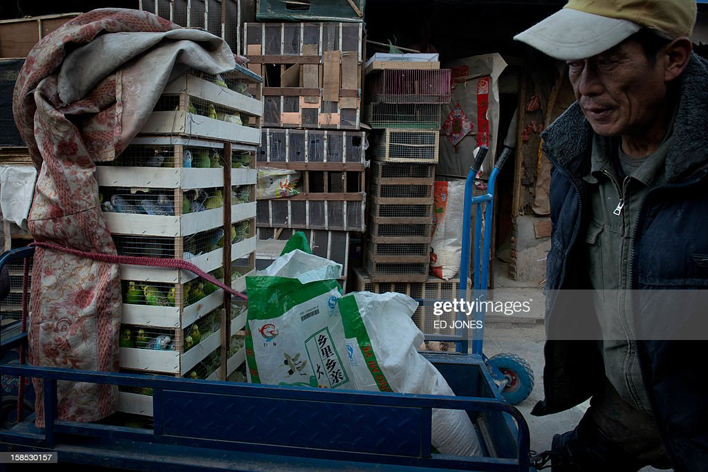 A man walks past boxes of parakeets on the back of a tricycle outside stall at a pigeon market in Beijing on December 18, 2012. The market was once the city's largest until plans were announced to demolish the area to make way for an office development. Vendors, who pay around 0.4 Yuan (0.06 USD) per square metre, according to state media, offer a variety of pigeon-fancying paraphernalia and other animals including rabbits, dogs, and crickets. AFP PHOTO / Ed Jones