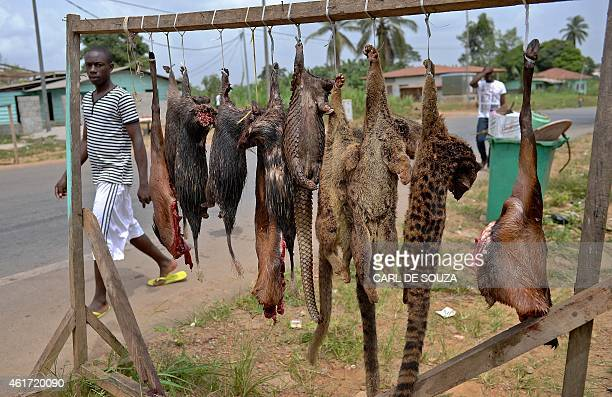 A man walks past bushmeat including pangolins bush rats and tiger cats for sale on the roadside outside Bata on January 18 2015 Monkey and bat...