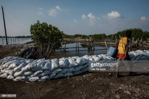 A man walks through the sand dike to protect the area from rising sea levels on June 8 2017 in Semarang Indonesia Indonesia is known to be one of the...