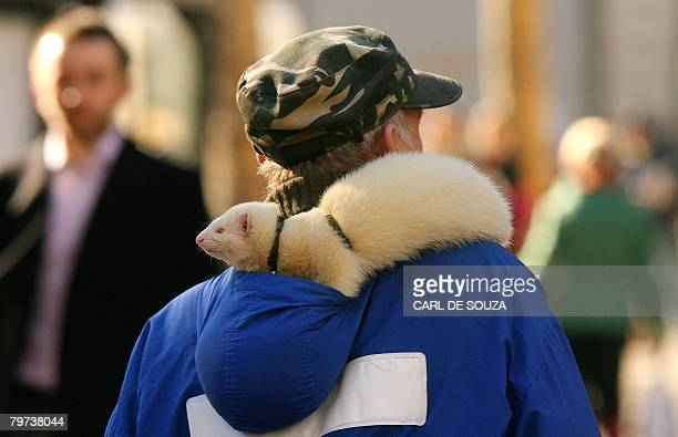 A man walks with a ferret on his shoulder in central London on February 13 2008 AFP PHOTO/CARL DE SOUZA