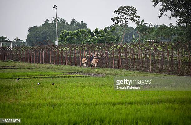 A man walks with his cows along the India/Bangladesh border fence July 10 2015 in Lalmonirhat District Bangladesh The India Bangladesh enclaves also...