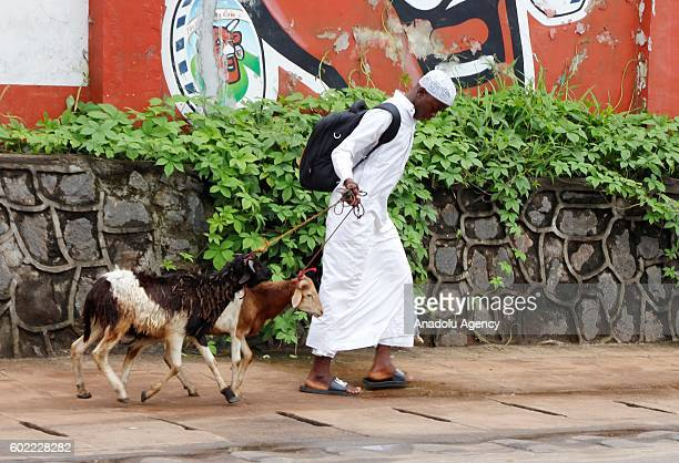 A man walks with sacrificial animals as people visit bazaars and markets to shop for the upcoming Muslim sacrificial festival 'Eid alAdha' on the...