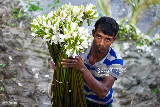 A man was carrying his water lilies near the road to stack those at Ichapur Water Lily retail market in Shirajdikhan Munshiganj Bangladesh on 14th...