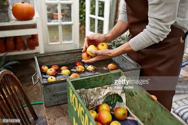 Man washing apples inside greenhouse