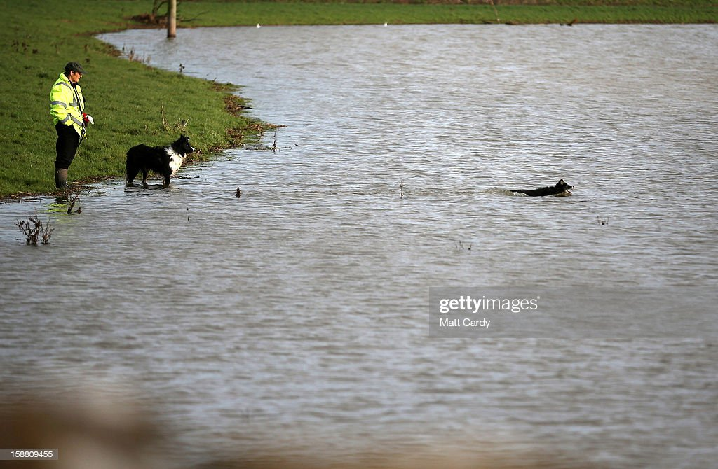 A man watches as his dogs swims in flood waters surrounding the village of Muchelney which has been cut off by flooding on the Somerset Levels on December 30, 2012 near Langport, England. The Met Office is warning of the risk of further flooding towards the end of the year, meaning 2012 is set to be the wettest on record.