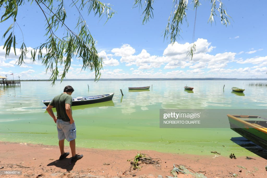 A man watches the water on shore of the Ypacarai Lake near Aregua, Paraguay, on February 2, 2013. Five months after the finding of cyanobacteria in its waters, the pollution in the once blue waters of the Ypacarai lake is worse than ever, chasing with its fetid emanations many Aregua residents toward other municipalities. AFP PHOTO/Norberto DUARTE