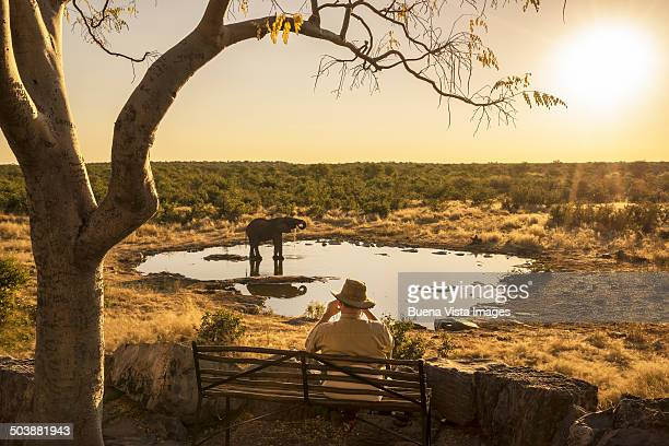 Man watching a drinking elephant