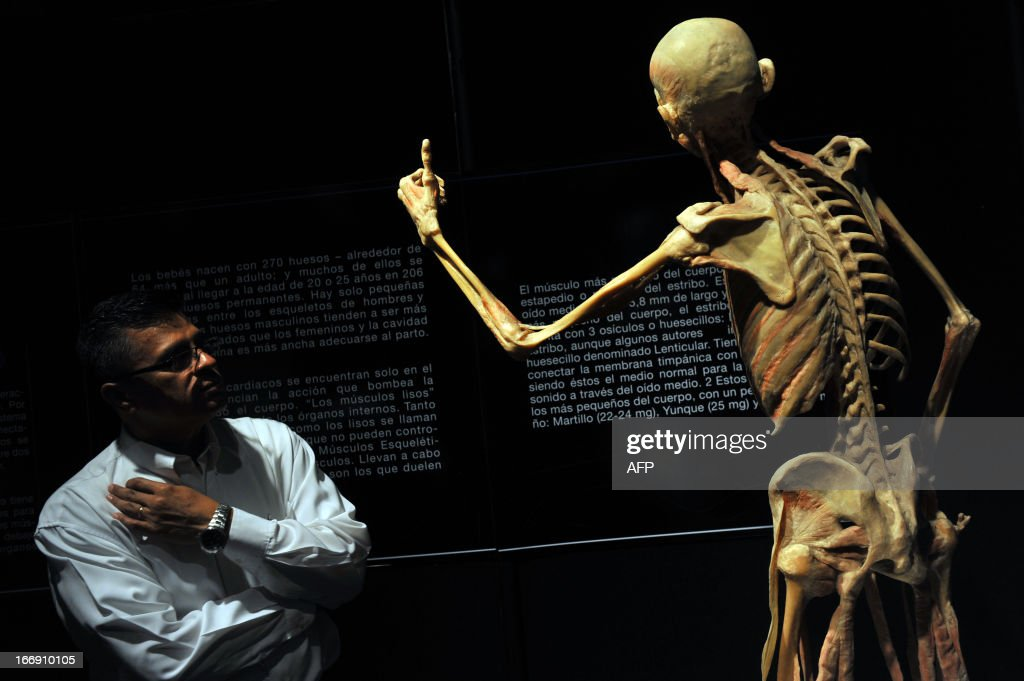 "A man watchs a human skeleton during the Our ??Body Exhibition, The Universe Within, which these days is presented in Managua, on April 18, 2013. ""Our Body"" uses a technique of polymer impregnation, developed by the German anatomist Gunther von Hagens. AFP PHOTO/Hector RETAMAL"