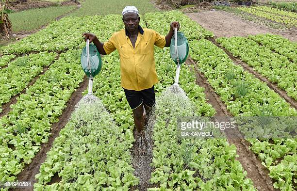 A man waters his salad garden on August 21 2015 in PortBouet a popular commune in Abidjan AFP PHOTO / SIA KAMBOU