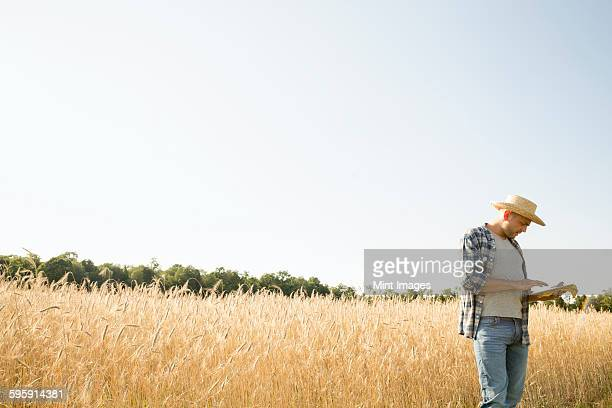 Man wearing a checkered shirt and a hat standing in a cornfield, a farmer using a digital tablet.