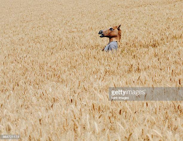 A man wearing a horse mask standing in a wheat field, near Pullman
