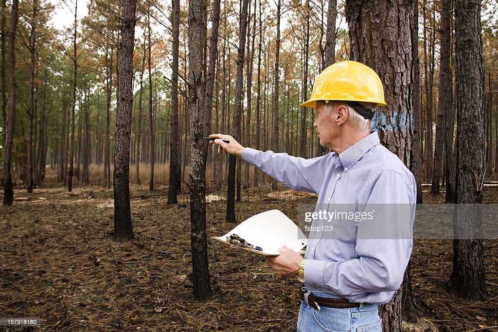 Man wearing hardhat and studying environmental conservation in burned forest