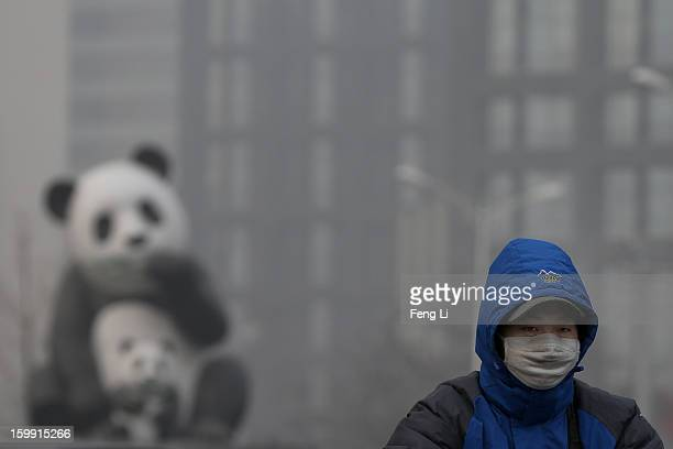 A man wearing the mask rides a bicycle through a panda sculpture during severe pollution on January 23 2013 in Beijing China The air quality in...