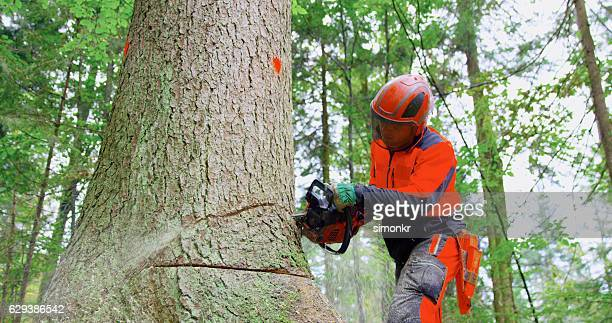 Man with chainsaw cutting tree trunk