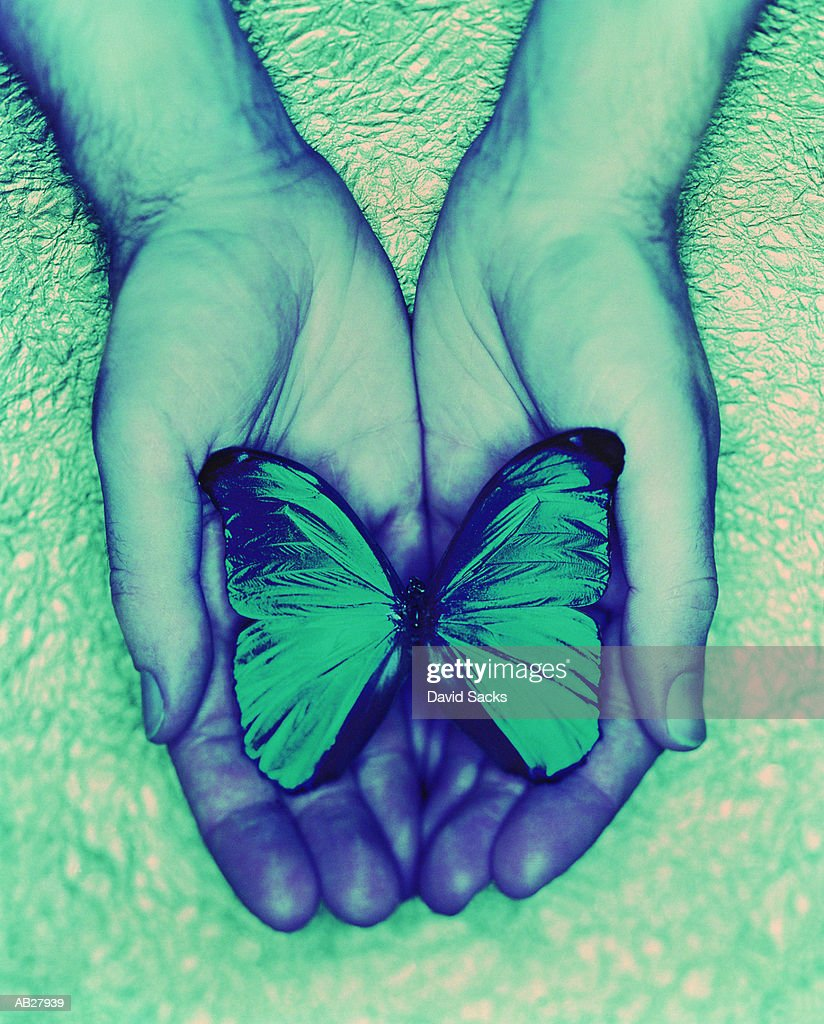 Man with cupped hands holding butterfly, close-up : Stock Photo