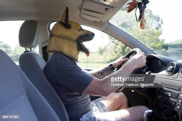 Man with dog mask drives car