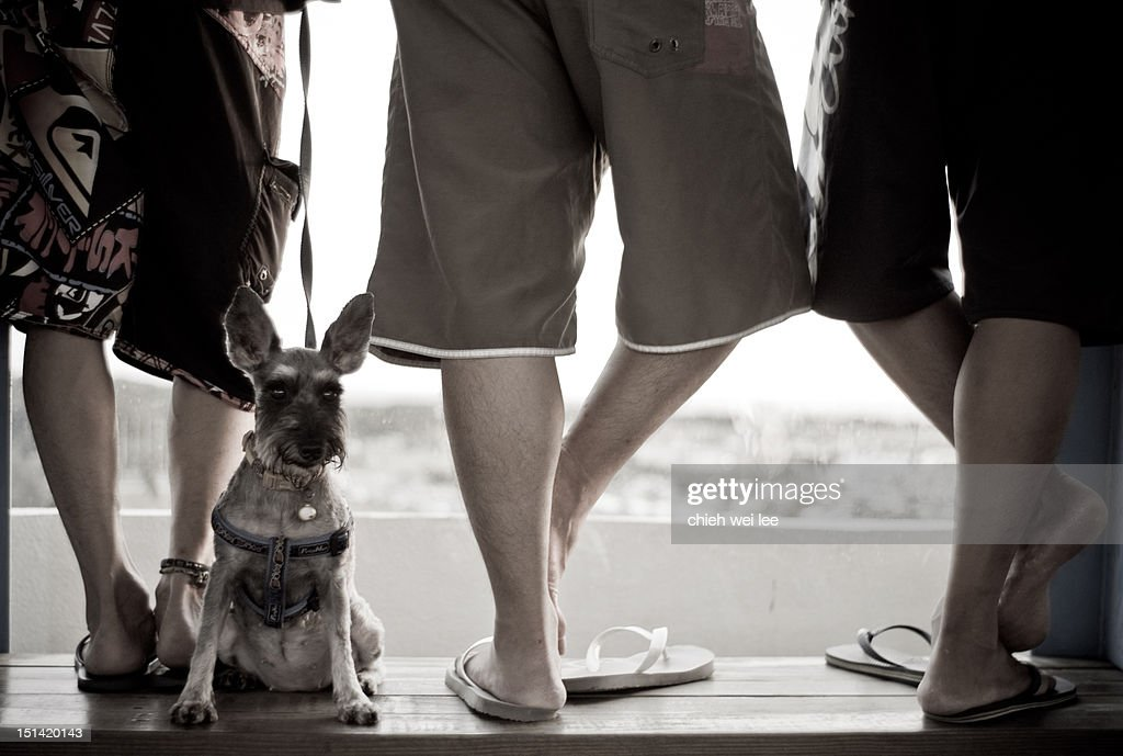 Man with dog : Stock Photo