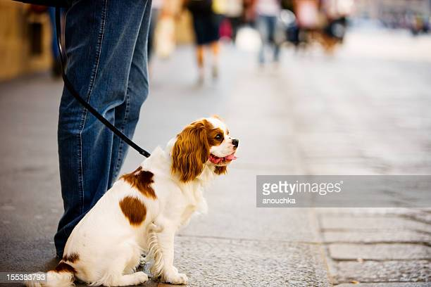 Man with dog standing on Milan street, Italy