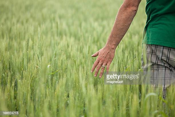Man With Hand in Unripe Wheat Field