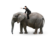 Man with pointing finger gesture riding on walking elephant, isolated on white.