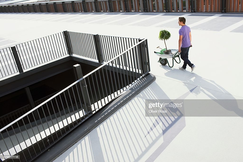 Man with Potted Plant in Wheelbarrow : Stock Photo
