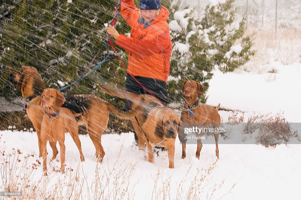 Man with rescue dogs in Snow : ストックフォト