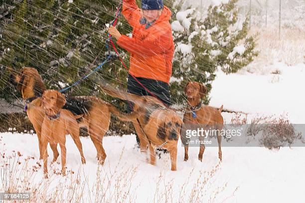 Man with rescue dogs in Snow