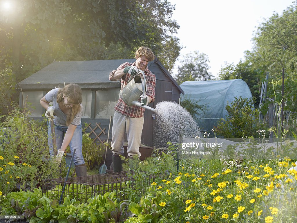 Man with watering can in allotment : Stock Photo