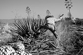 A man work in tequila industry black and white