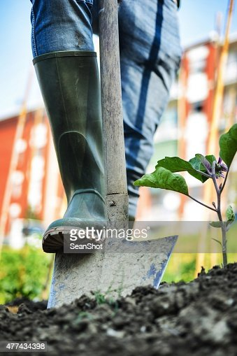 Man working in a Urban City Vegetables Garden