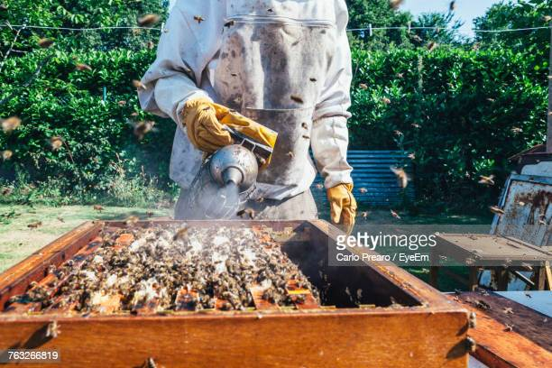 Man Working With Bees