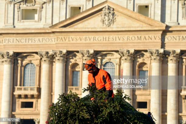 A man works on a Christmas tree arrived early today on a truck from Poland on November 23 2017 at St Peter's square in Vatican This year's the...
