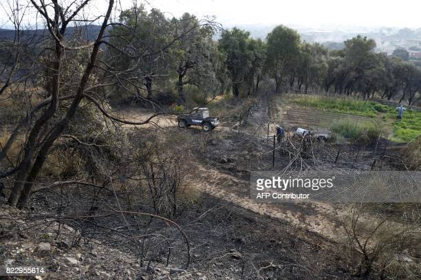 A man works on his burnt land devastated by a fire in Biguglia on the French Mediterranean island of Corsica France asked for Europe's help on July...