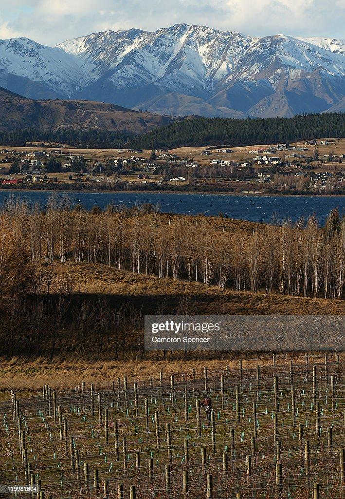 A man works on his vineyard next to Lake Wanaka on July 28, 2011 in Wanaka, New Zealand.
