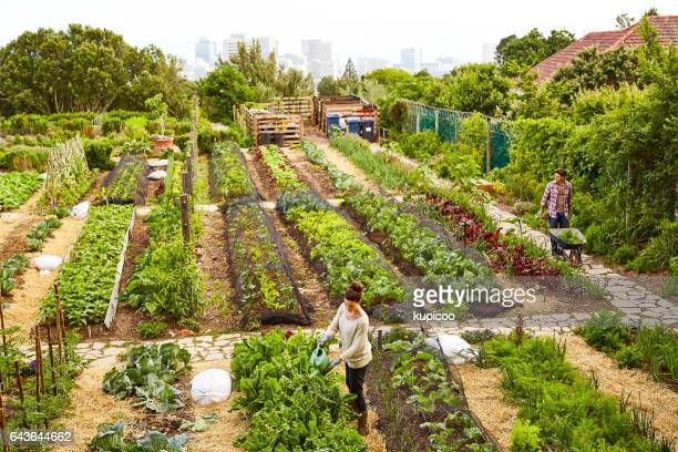 Managing their urban garden