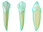 mandibular canine tooth in the vestibular, palatal and lateral views with blue neon wireframe wrapping the tooth. Realistic 3d illustration of mandibular canine tooth with blue wire