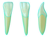mandibular lateral incisor tooth in the vestibular, palatal and lateral views with blue neon wireframe wrapping the tooth. Realistic 3d illustration of mandibular lateral incisor tooth with blue wire