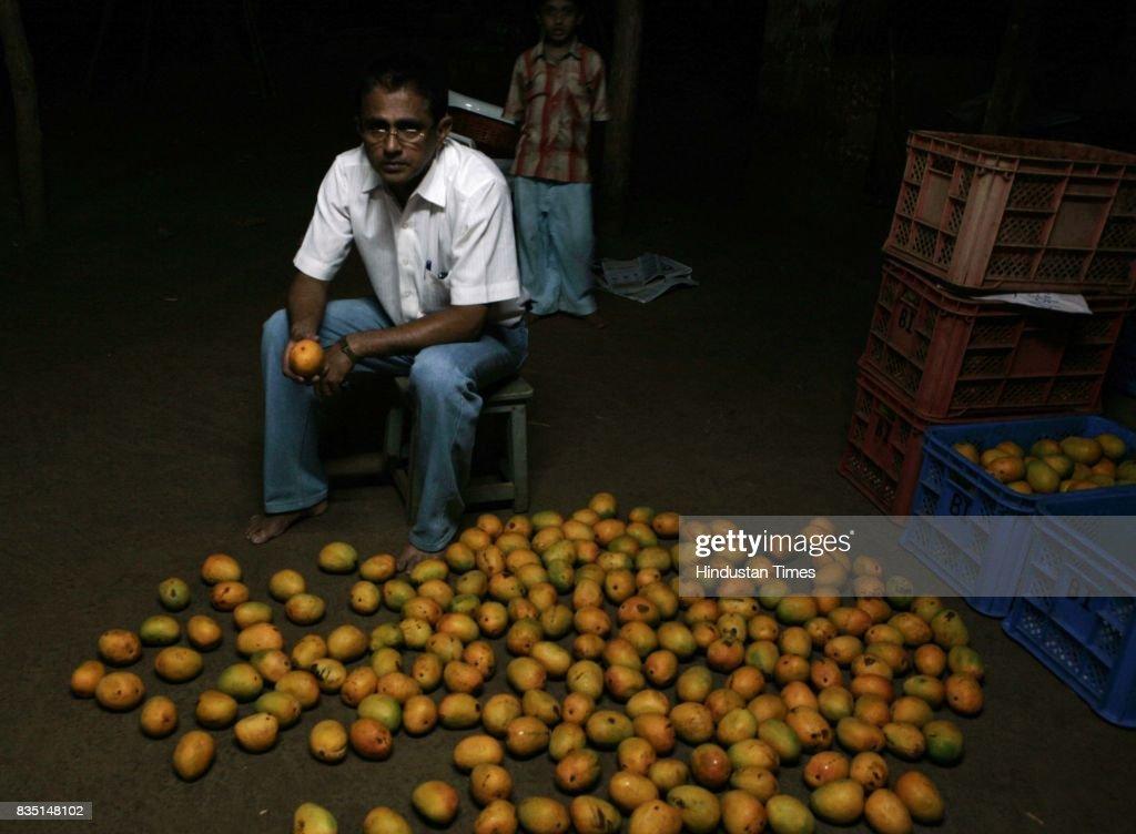 Mango crop.