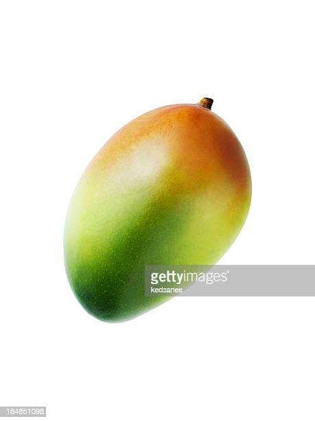 Mango fruit isolated on white