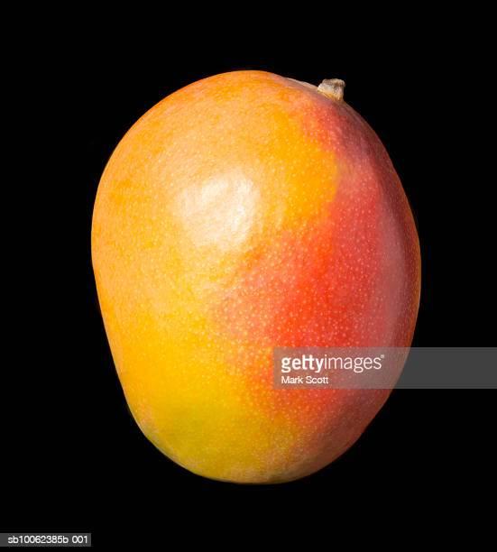 Mango fruit on black background