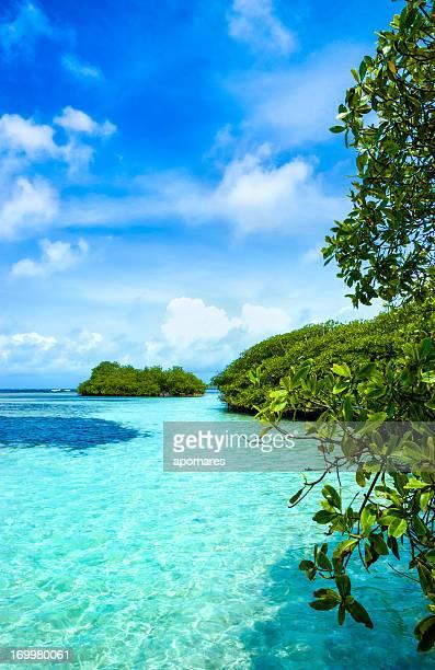 Forêt de Mangrove et les eaux peu profondes dans une île tropicale