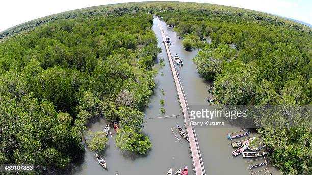 Mangrove Forest at Alas Purwo National Park