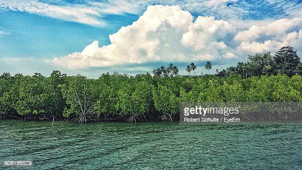 Mangrove Forest In River Against Sky