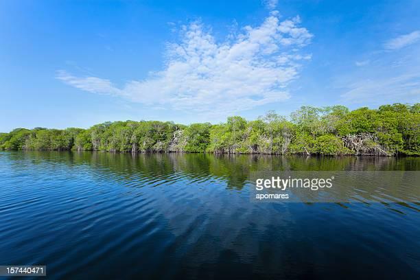 Forêt de Mangrove tropicale côtière sur un lagon