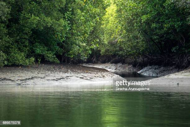 Mangrove forest scenery