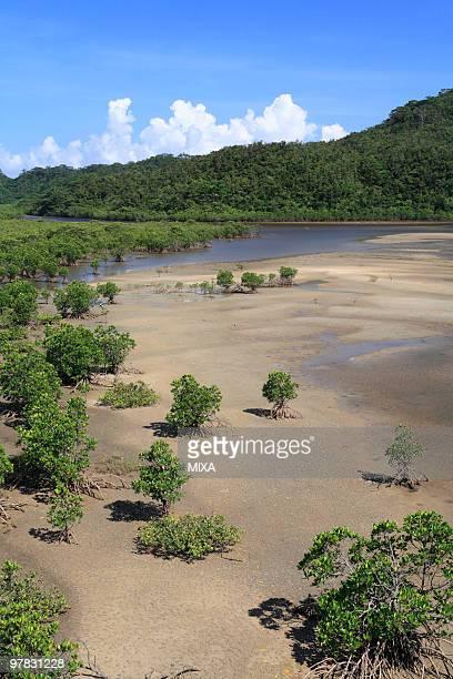 Mangrove, Iriomote Island, Taketomi, Okinawa, Japan