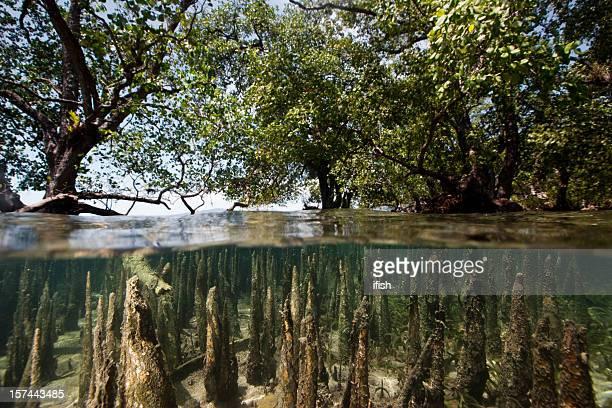 Mangroves à marée haute, côté ouest de Bunaken, en Indonésie