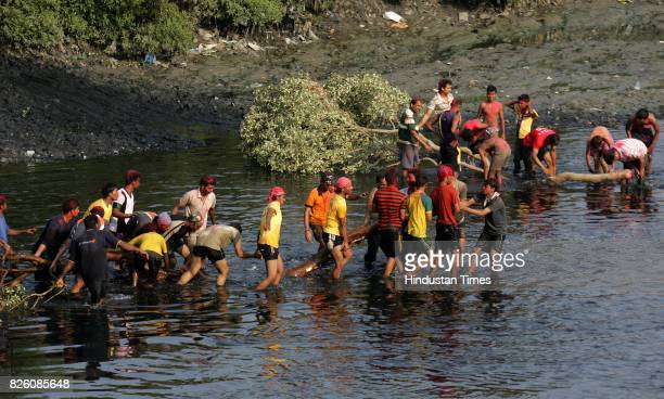 Mangroves Holi Festival Tree cut Tree felling A group of youngsters from Mahim Machimaar Nagar hacks a bunch of mangroves from the fastdepleting...
